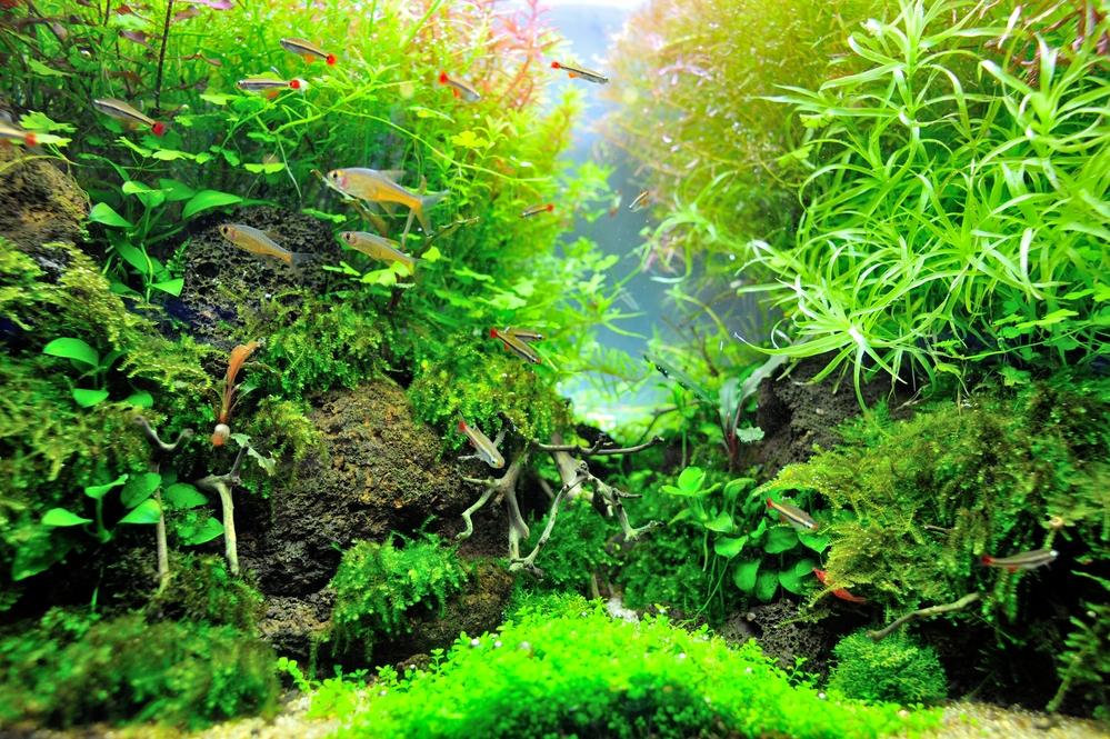 5DK - aqua-ferksvandsaquarium - store-bededag
